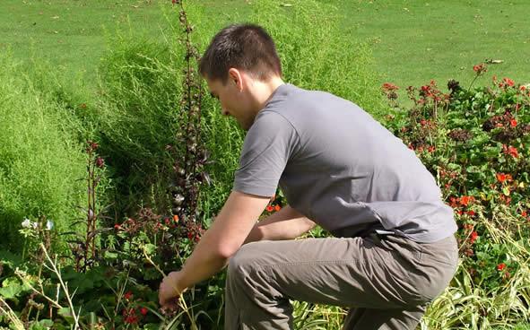Nancy 54 clean grand est services domicile nancy for Tonte de pelouse a domicile